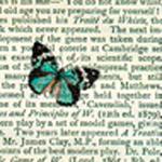 Sommerfugle af Marion McConaghie