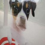 Den trofaste hund