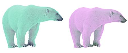 isbjorn-farver