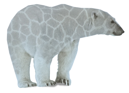 isbjorn-giraf