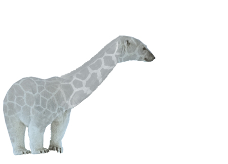 isbjornsgiraf
